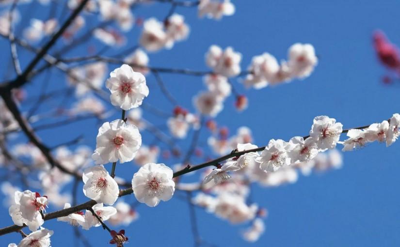 Reis naar japan, planning (1)